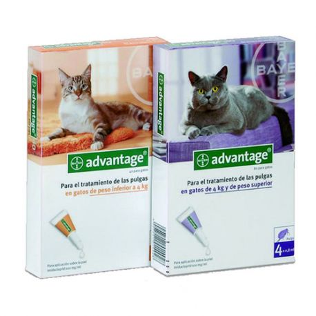 Advantage para gato