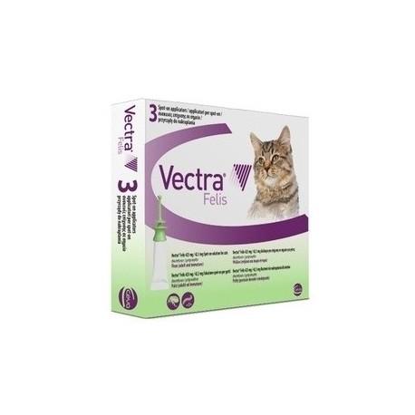 Vectra Felis